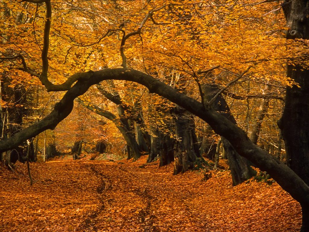 L'autunno dei colori sulle montagne siciliane